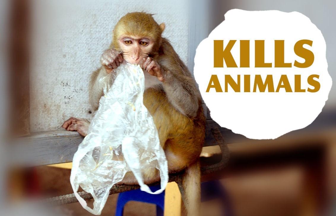 Plásticos asesinos de animales