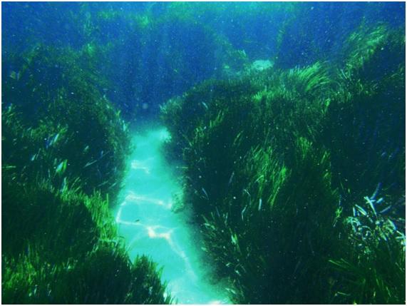 Muros vegetales que podrían contener la subida del nivel del mar