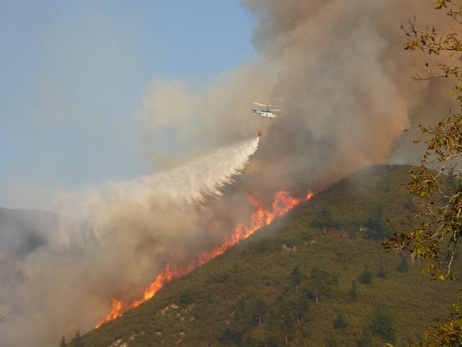 Pastoreo en las zonas incendiadas en Asturias
