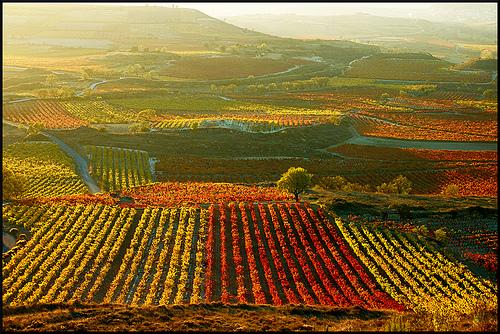 Bruselas retira su propuesta de nuevas reglas para el vino ecológico por falta de apoyos
