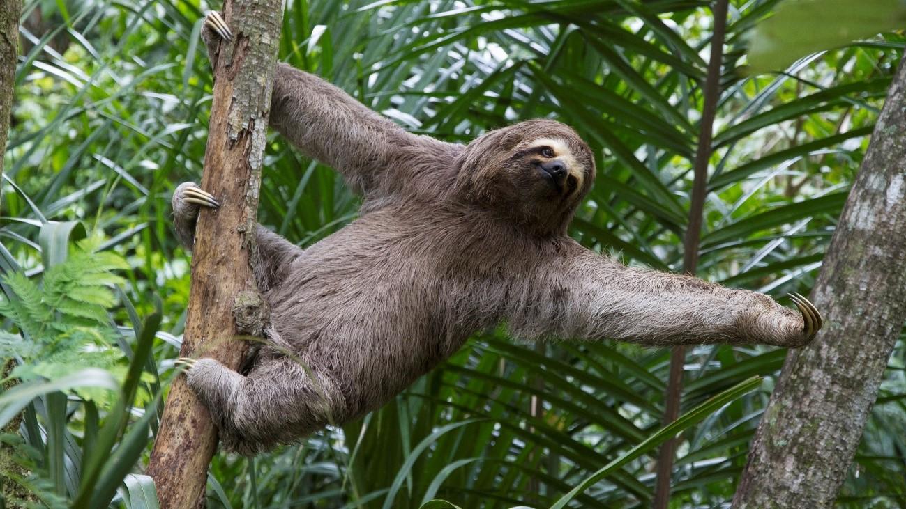8 animales increíblemente lentos