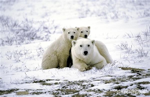 Europa respalda un Santuario en el Ártico