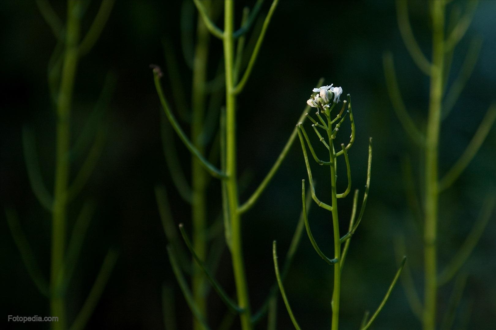 Científicos de Salamanca descubren el mecanismo de defensa de las plantas frente al exceso de luz