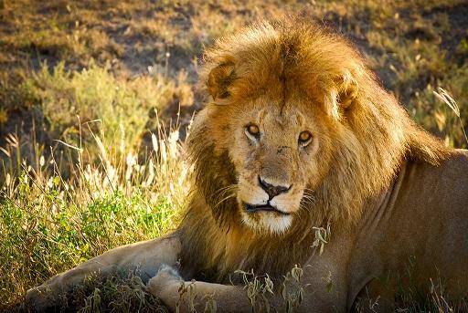 Si asesinaron al célebre Cecil ¿qué les espera a los demás?
