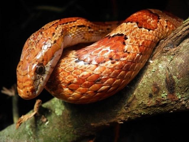Un taller para desmontar mitos sobre serpientes y tarántulas se celebra este viernes en El Corte Inglés de Badajoz
