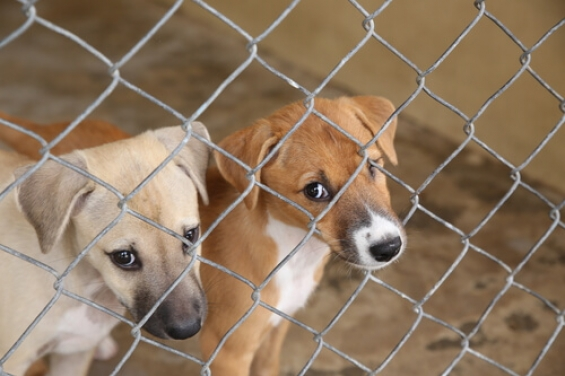 Estados Unidos. Cientos de animales llegan a Florida en busca de un hogar