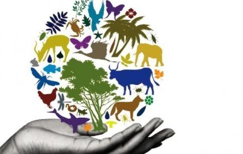 Día Internacional de la Diversidad Biológica / 22-05-2017
