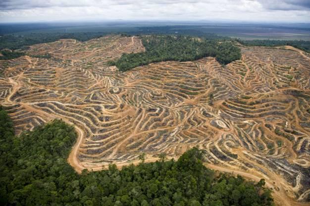 Borneo, una deforestación 'demoledora'