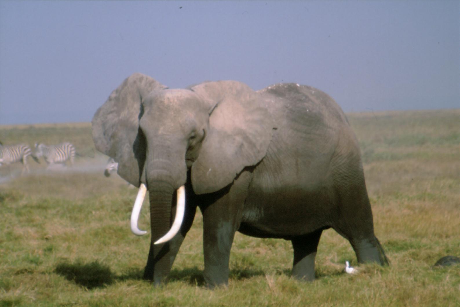 Los mamíferos aumentaron de tamaño con la extinción de los dinosaurios