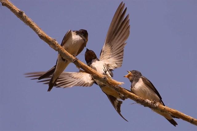 La Junta de CyL promociona el turismo ornitológico en una feria en Inglaterra