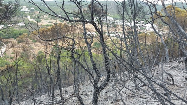 Controlado el incendio declarado en Sa Talaia de Sant Antoni (Ibiza) tras calcinar 8 hectáreas de bosque
