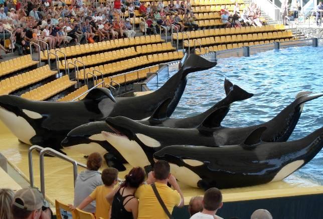 Montar en elefante, nadar entre delfines, o ver a una orca hacer cabriolas en una piscina, no es una buena idea…