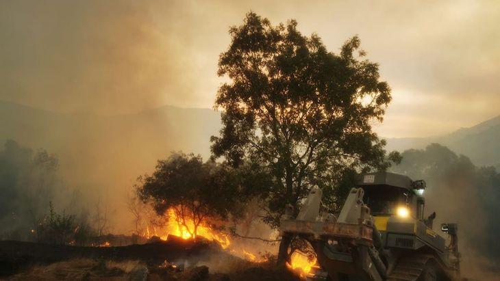 El gobierno sigue restaurando áreas de incendios forestales