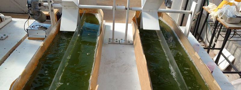 Algas mexicanas: los biocombustibles del siglo XXI