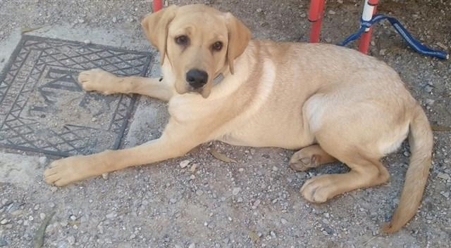 Los veterinarios piden al Senado que reduzca el IVA del cuidado de las mascotas