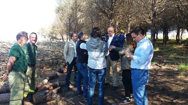Trabajos de prevención de incendios forestales montes públicos de Cádiz