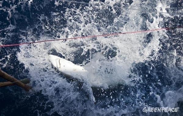 Alivio para los tiburones y las mantas