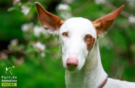 Canarias. Ley de Protección de Animales