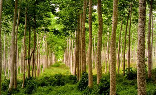 Gestión de Recursos Forestales, el curso que te cautivará