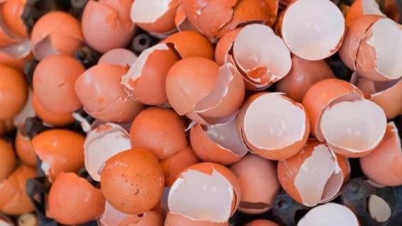 Argentina: Alumnos logran sacar arsénico del agua utilizando cáscara de huevo