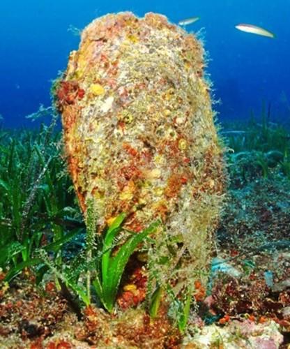 Nacras, joyas mediterráneas al borde de la extinción