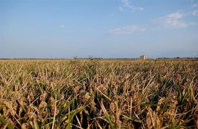 La superficie agraria ecológica de la Comunitat Valenciana aumenta un 20% en dos años