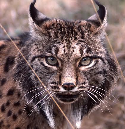 Rastros de la fauna ibérica, un curso recomendado para ti
