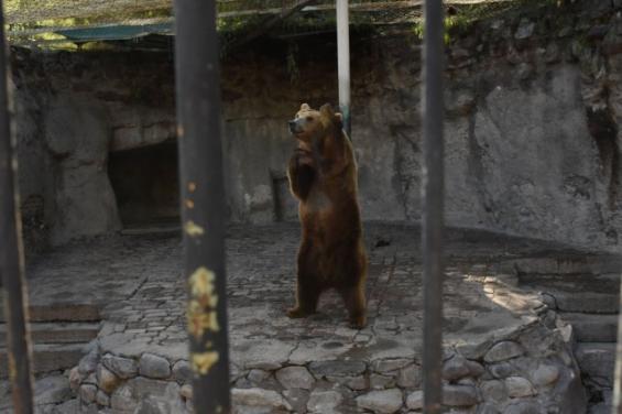 Argentina: El Ecoparque de Mendoza contará con un hospital veterinario