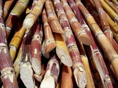 Convierten el azúcar directamente en diésel y con más potencia que el etanol