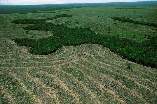 La Amazonia Brasileña ha perdido 700.000km2 en cuatro décadas