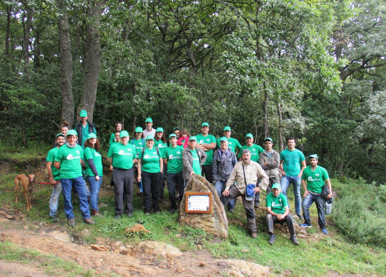 Voluntarios del Provoca plantan y protegen un centenar de nuevos tejos en los Bosques de Campoo de Yuso