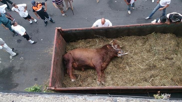 Almassora y la extrañísima muerte de tres toros