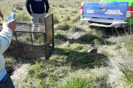 Argentina: Policía Ambiental de Córdoba secuestró fauna silvestre en Serrano