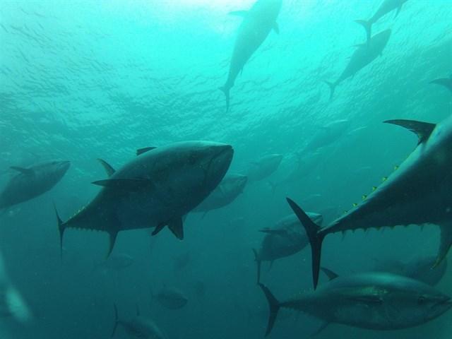 El Gobierno se prepara para adecuar sus normas pesqueras ante el