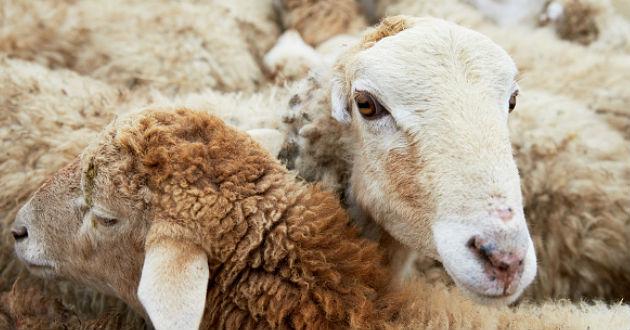 La FAO pide vigilar más la diversidad de animales ante el riesgo de extinción