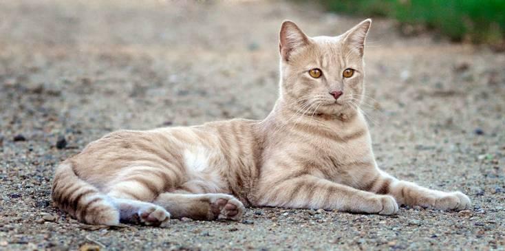 Denuncian al Ayuntamiento de Cartagena que pretende sacrificar a todos los gatos de sus calles