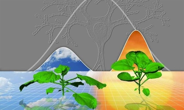 Plantas y cerebros crecen según reglas matemáticas similares