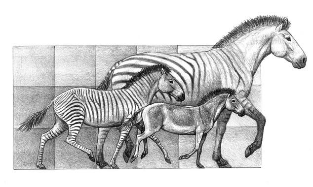 La diversificación de los caballos se produjo por los cambios climáticos