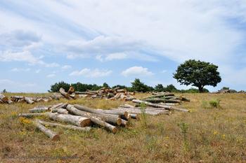El aprovechamiento sostenible de la madera