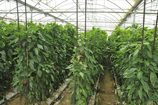 Optimización de la respuesta al incremento de CO2 en cultivos de invernadero en condiciones de clima mediterráneo