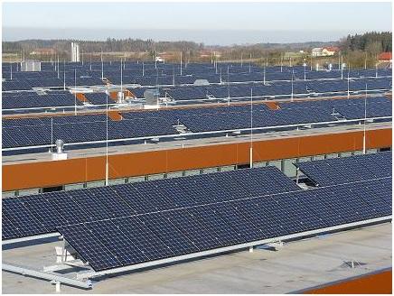 Granjas fotovoltaicas podrían producir plantas biocombustibles