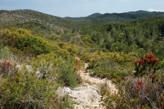 El cambio climático ya amenaza los ecosistemas mediterráneos terrestres
