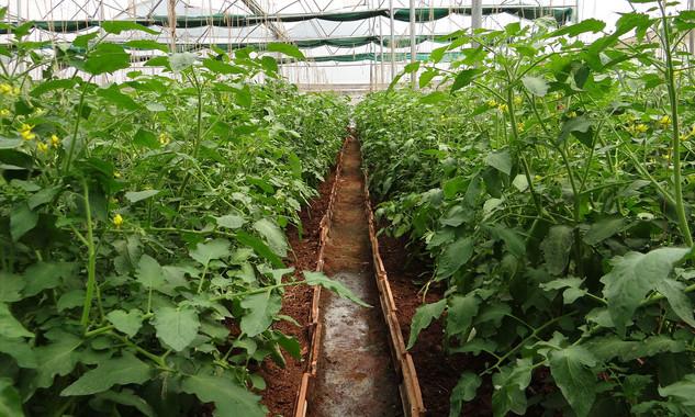 drones para controlar el clima y la monitorizaci n de cultivos On cultivos en asocio