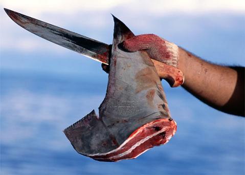 Sopa de aleta de tiburón no, gracias