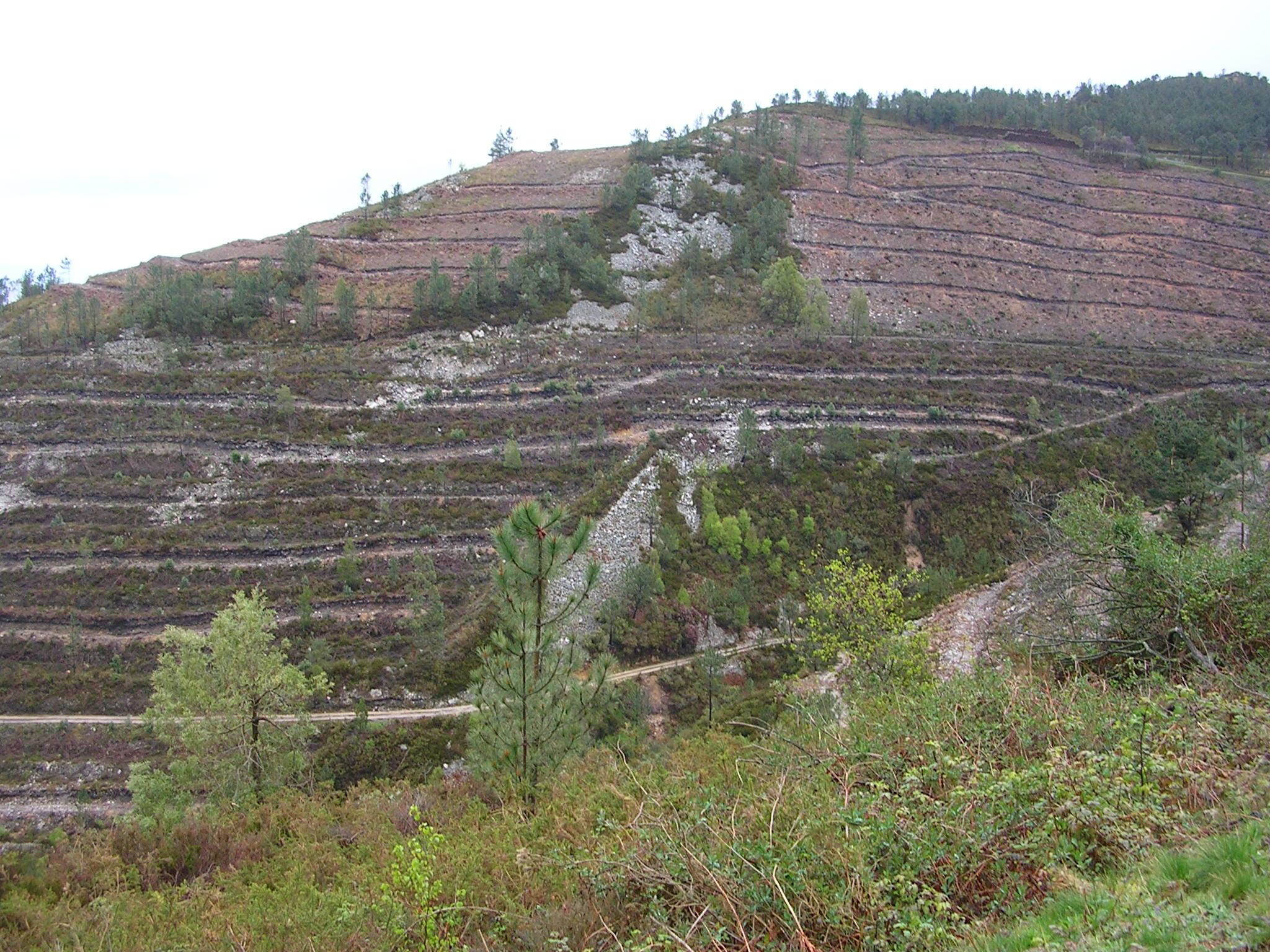 Asturias. No a las fumigaciones con flufenoxuron en los montes asturianos