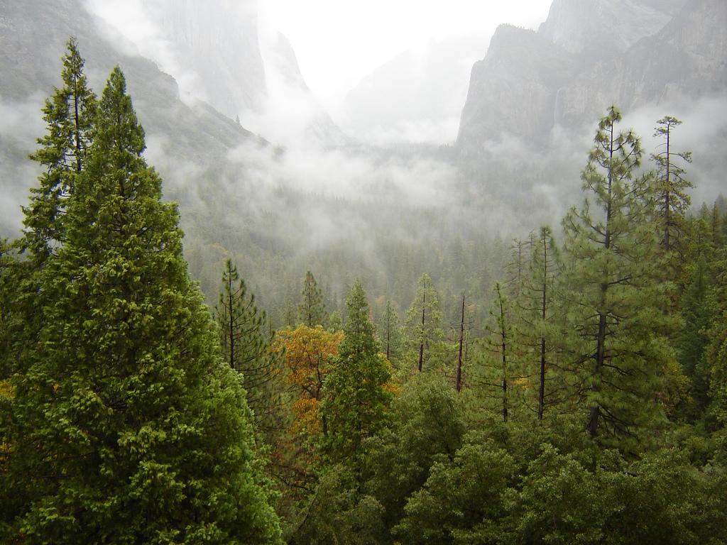 'Nuestros bosques están enfermos de colesterol'