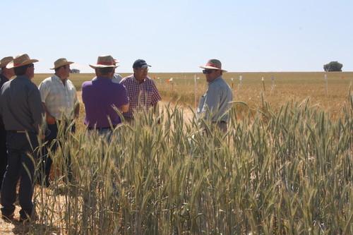 Un proyecto de investigación del IRNASA impulsa la agricultura ecológica