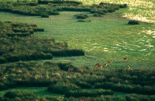 Andalucía. El Espacio Natural Doñana se amplía con 14.400 hectáreas para proteger toda la cuenca de la Rocina