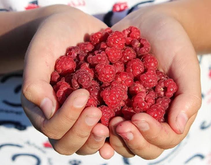 Frambuesa: un superalimento completo y delicioso