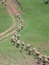 Andalucía 'mete en el cajón' a las vías pecuarias en su 20 aniversario